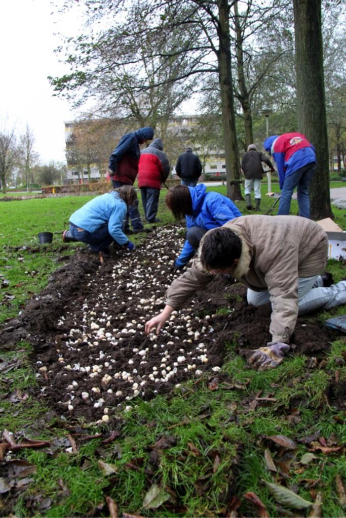 Om vervolgens een bollenmengsel te planten, waarna de graszode er weer op werd gelegd.