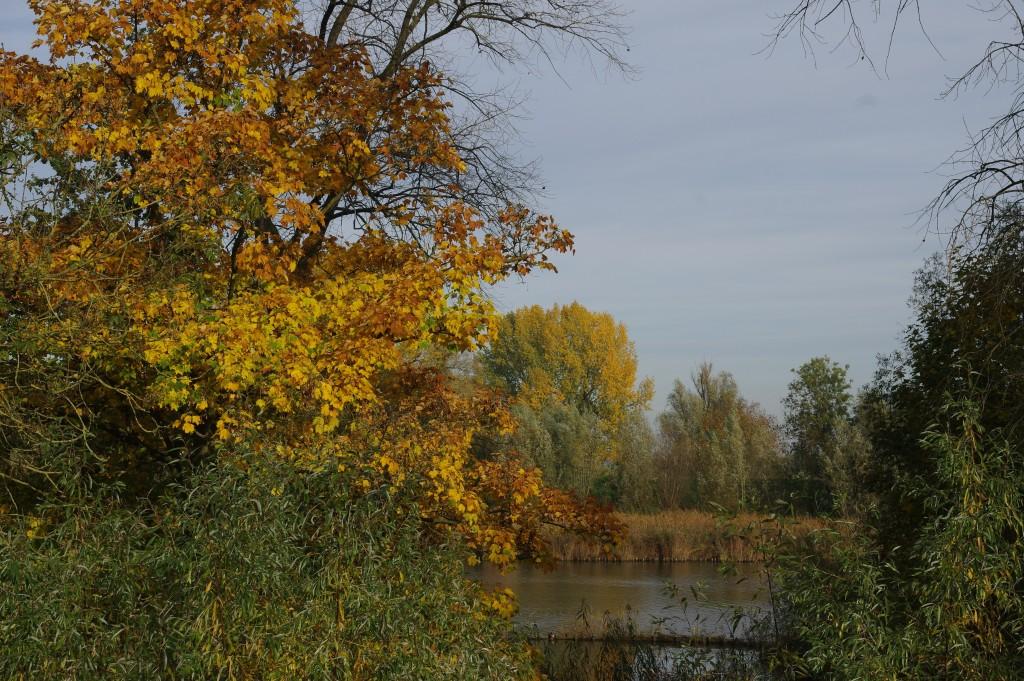 Veldesdoorn in de herfst